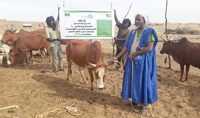 Directaid مشاريع التنمية Al-Sanabel Project Cow Production-9 1