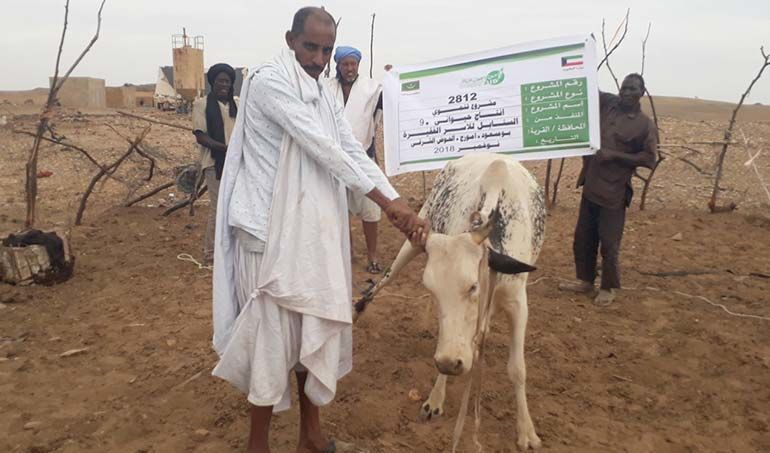 Directaid مشاريع التنمية Al-Sanabel Project Cow Production-9 4