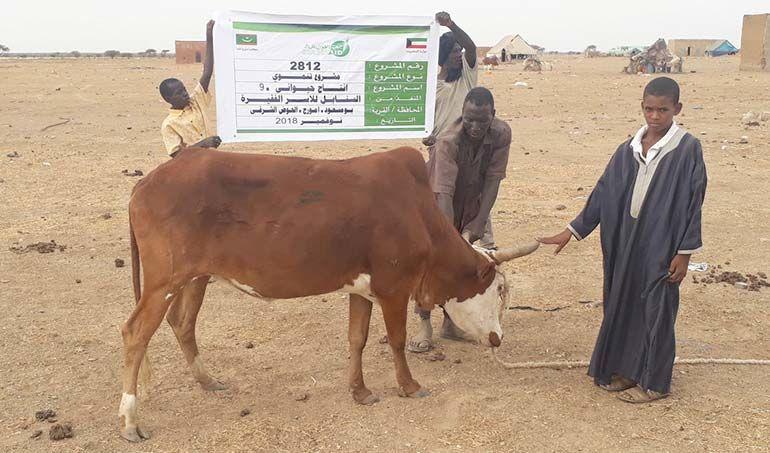 Directaid مشاريع التنمية Al-Sanabel Project Cow Production-9 5