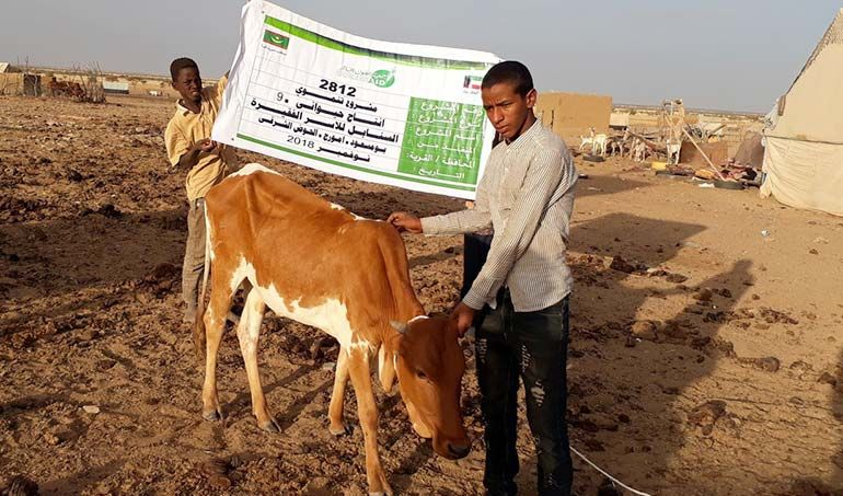 Directaid مشاريع التنمية Al-Sanabel Project Cow Production-9 6