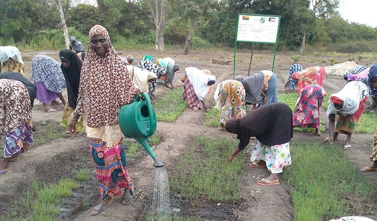 Directaid مشاريع التنمية Al-Juman Farm 2
