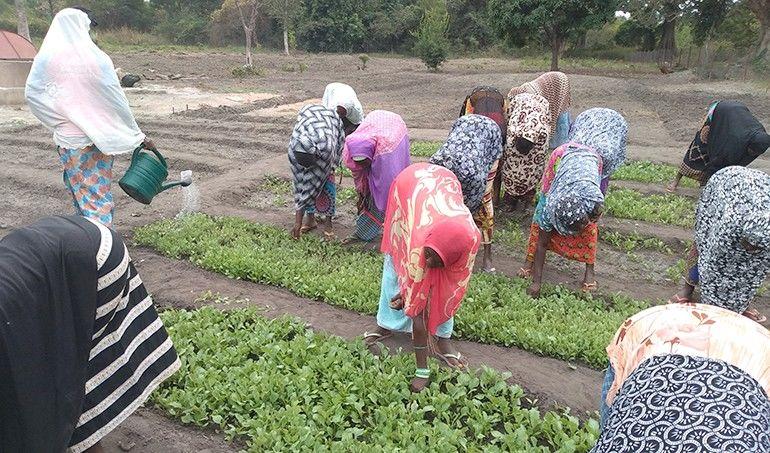 Directaid مشاريع التنمية Al-Juman Farm 3