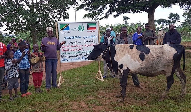 Directaid  Al-Sanabel Project Cow Production-10 1