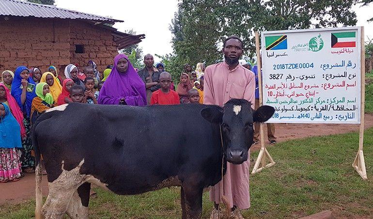 Directaid مشاريع التنمية Al-Sanabel Project Cow Production-10 1