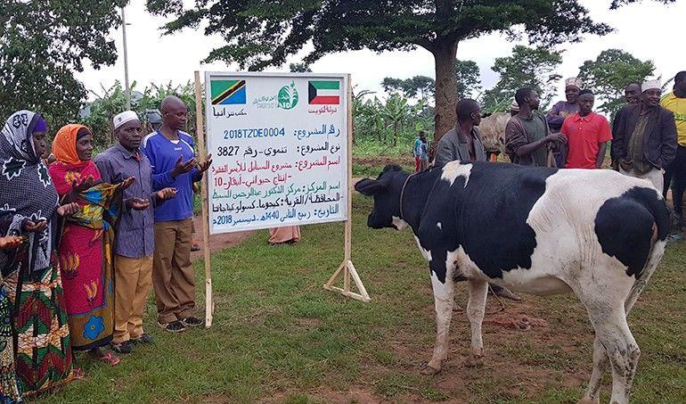 Directaid مشاريع التنمية Al-Sanabel Project Cow Production-10 3