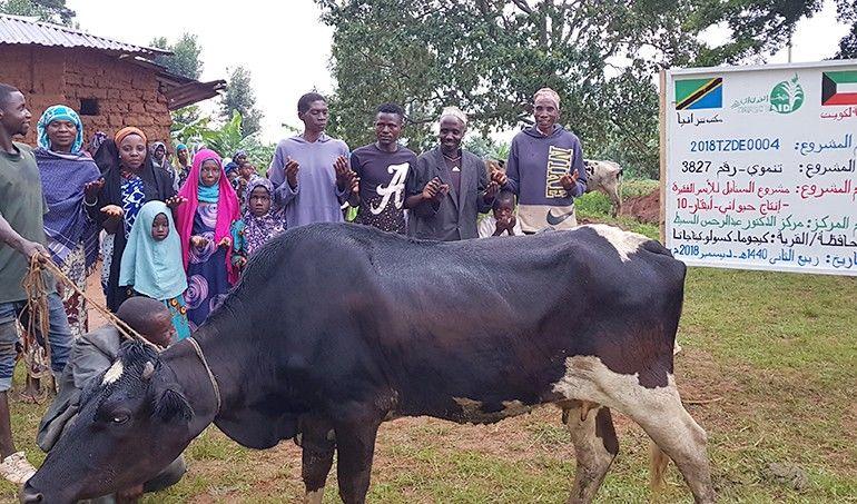 Directaid مشاريع التنمية Al-Sanabel Project Cow Production-10 5
