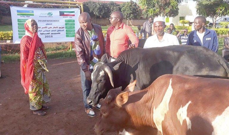 Directaid development Al-Sanabel Project Cow Production-12 4