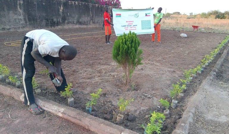 Directaid مشاريع التنمية Green Yard Project 7