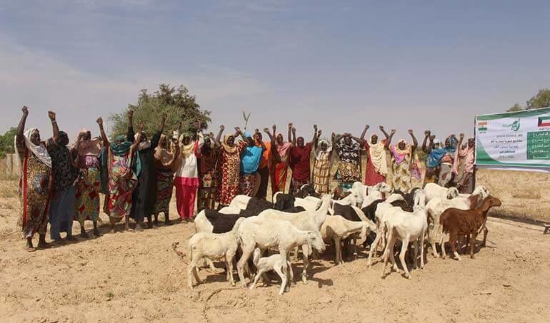 Directaid مشاريع التنمية Keep them from Destitution-5 31