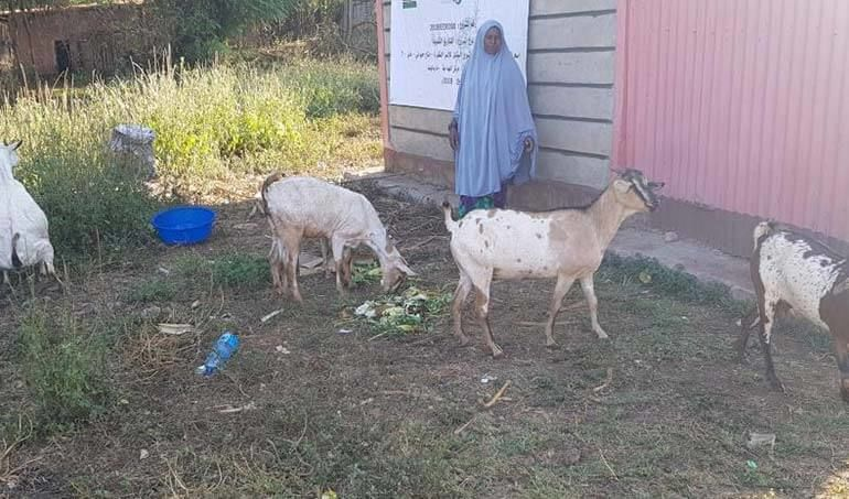 Directaid مشاريع التنمية Al-Sanabel Project - Goat Production-7 9