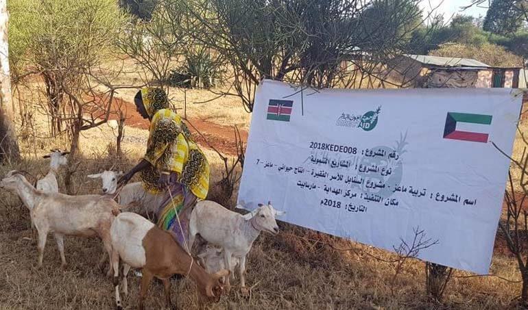 Directaid مشاريع التنمية Al-Sanabel Project - Goat Production-7 11