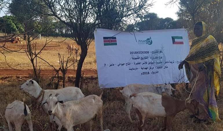 Directaid مشاريع التنمية Al-Sanabel Project - Goat Production-7 12