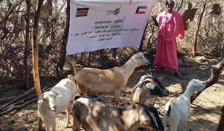 Directaid مشاريع التنمية Al-Sanabel Project - Goat Production-7 14
