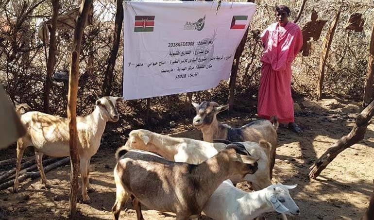 Directaid مشاريع التنمية Al-Sanabel Project - Goat Production-7 15
