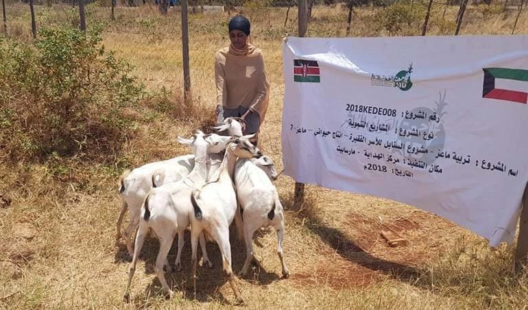 Directaid مشاريع التنمية Al-Sanabel Project - Goat Production-7 1