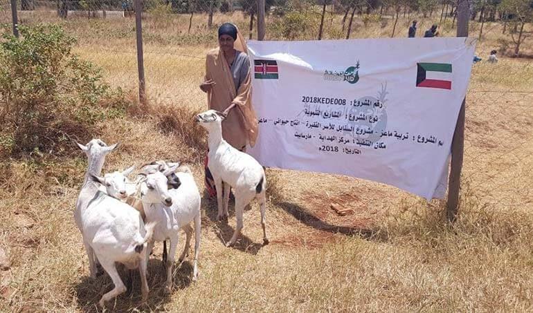 Directaid مشاريع التنمية Al-Sanabel Project - Goat Production-7 2