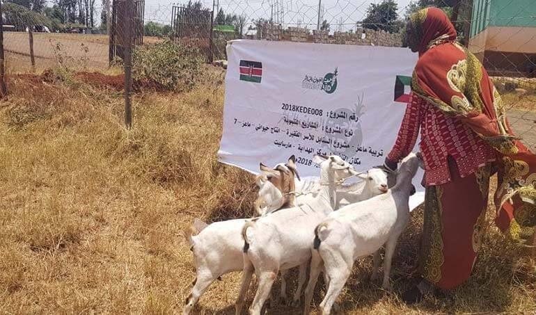 Directaid مشاريع التنمية Al-Sanabel Project - Goat Production-7 4