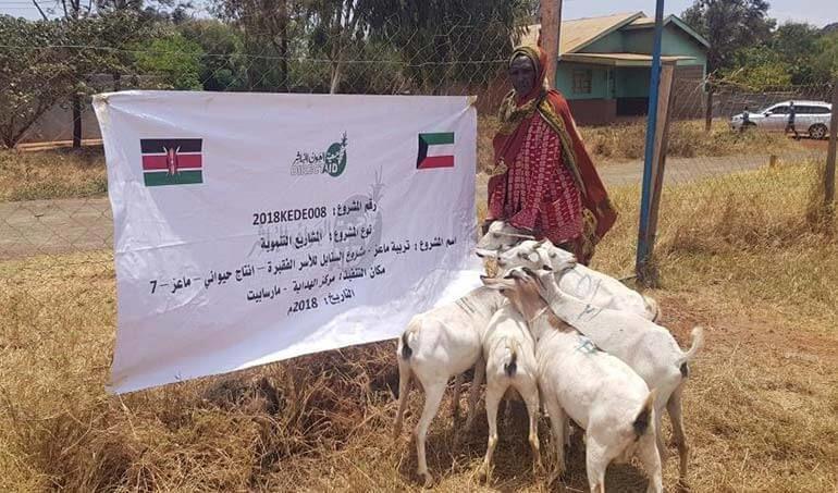 Directaid مشاريع التنمية Al-Sanabel Project - Goat Production-7 5