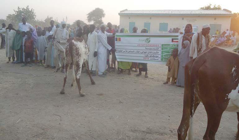 Directaid مشاريع التنمية Al-Sanabel Project Cow Production-3 1