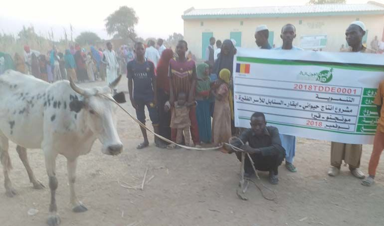 Directaid مشاريع التنمية Al-Sanabel Project Cow Production-3 2