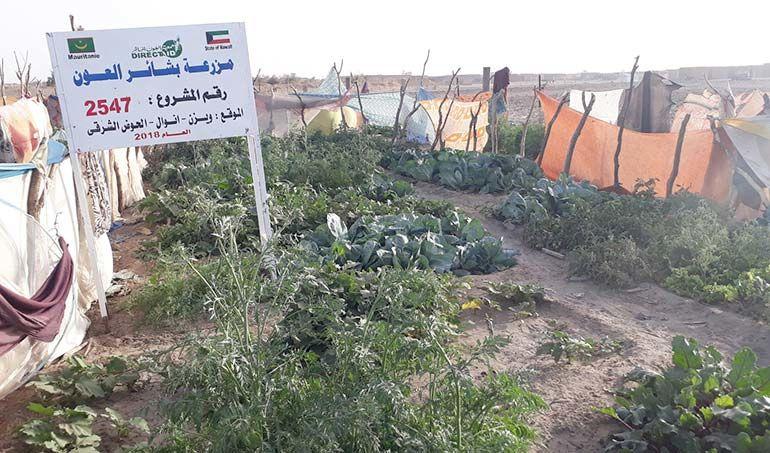 Directaid مشاريع التنمية Bashayir Al-Oeawn Farm 2