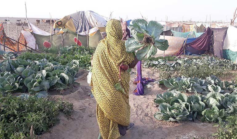 Directaid مشاريع التنمية Bashayir Al-Oeawn Farm 5