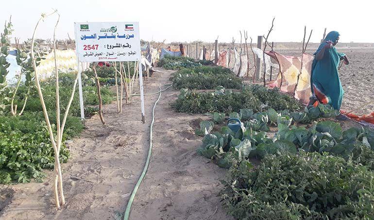 Directaid مشاريع التنمية Bashayir Al-Oeawn Farm 6
