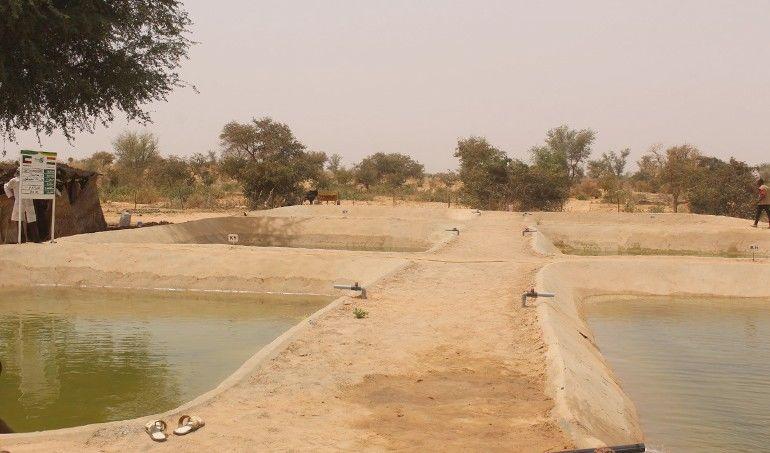 Directaid مشاريع التنمية Direct Aid Farm 4