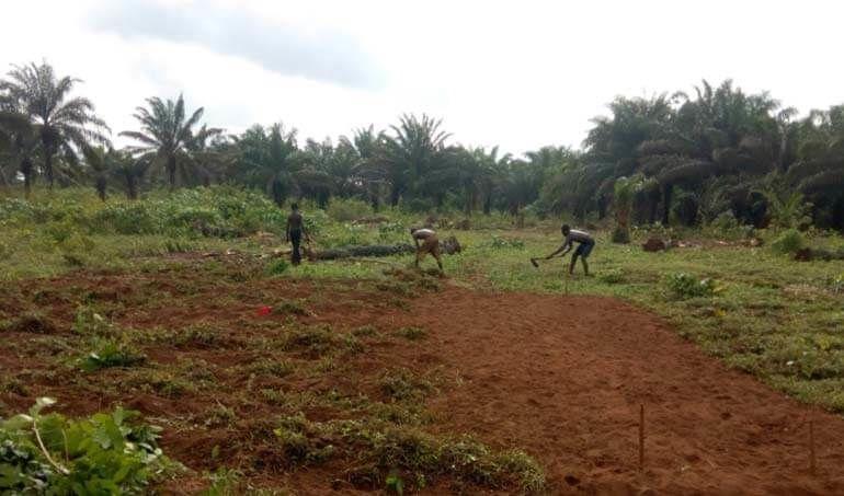 Directaid مشاريع التنمية Green Yard Project -3rd 8
