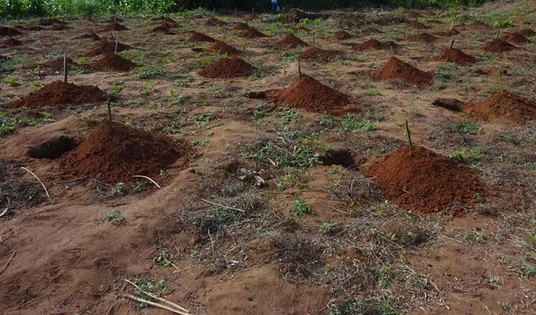 Directaid مشاريع التنمية Green Yard Project -3rd 9