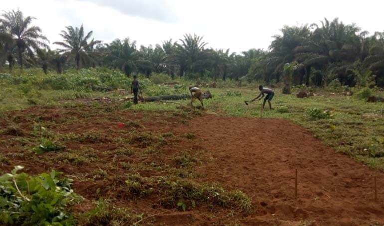 Directaid مشاريع التنمية Green Yard Project -3rd 10