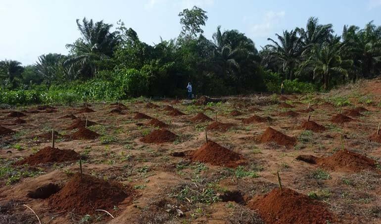 Directaid مشاريع التنمية Green Yard Project -3rd 11