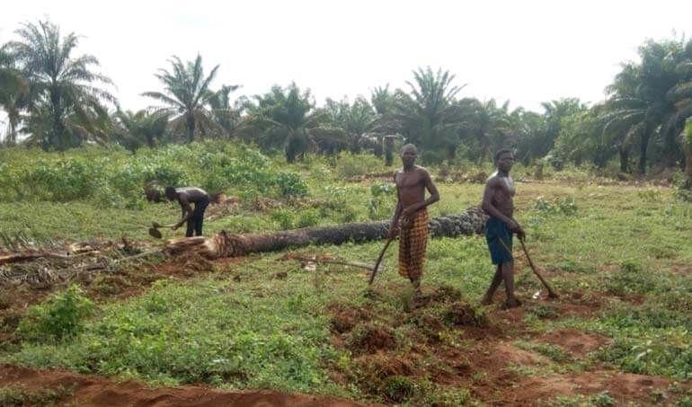Directaid مشاريع التنمية Green Yard Project -3rd 12