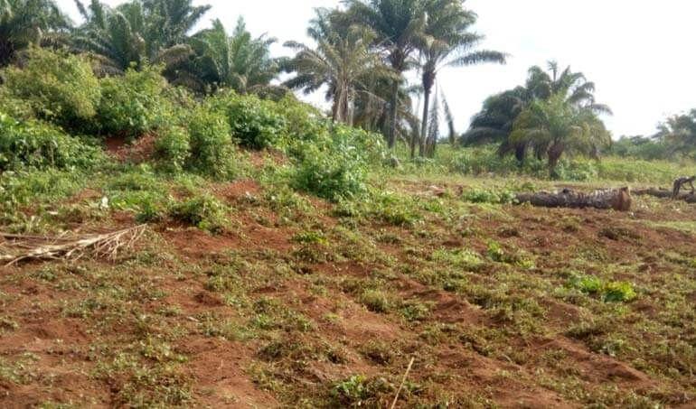 Directaid مشاريع التنمية Green Yard Project -3rd 13