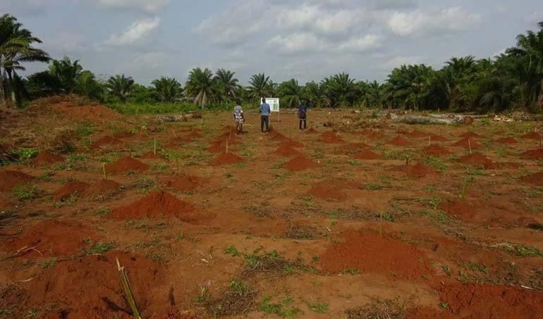 Directaid مشاريع التنمية Green Yard Project -3rd 1