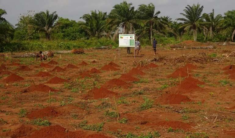 Directaid مشاريع التنمية Green Yard Project -3rd 20