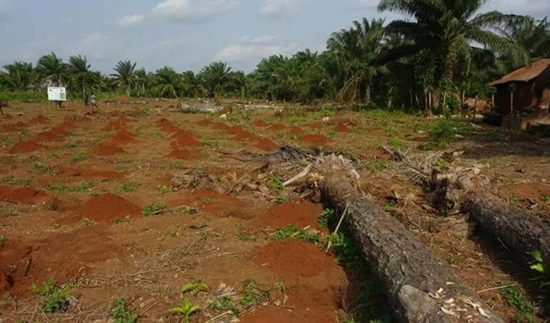 Directaid مشاريع التنمية Green Yard Project -3rd 21