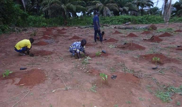 Directaid مشاريع التنمية Green Yard Project -3rd 23