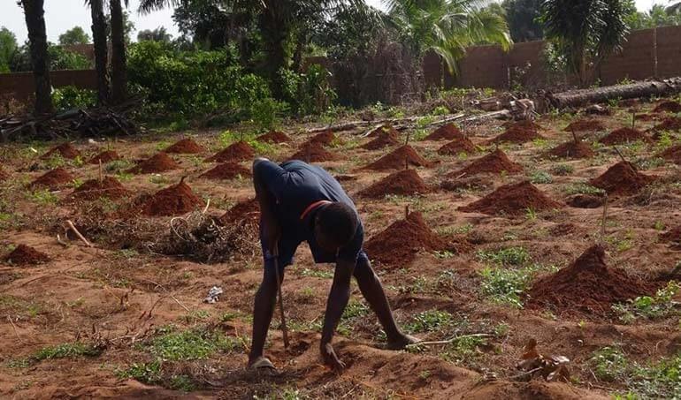 Directaid مشاريع التنمية Green Yard Project -3rd 26