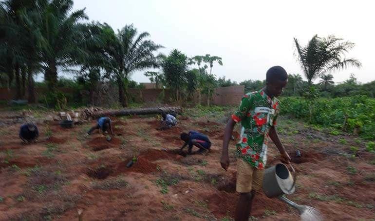 Directaid مشاريع التنمية Green Yard Project -3rd 27