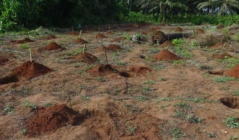 Directaid مشاريع التنمية Green Yard Project -3rd 30