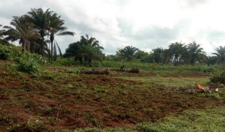 Directaid مشاريع التنمية Green Yard Project -3rd 3