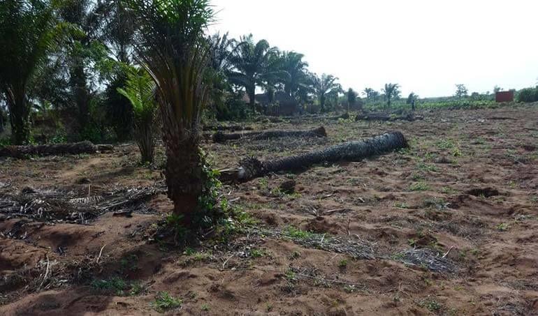 Directaid مشاريع التنمية Green Yard Project -3rd 4