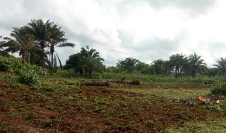 Directaid مشاريع التنمية Green Yard Project -3rd 5