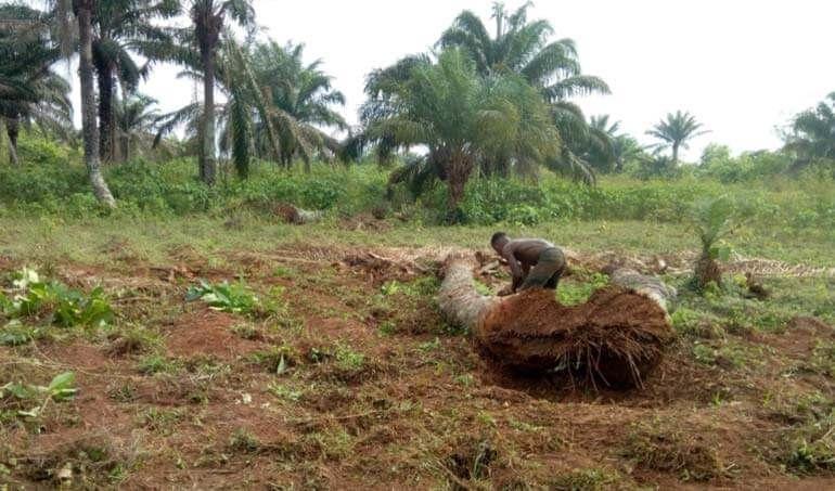 Directaid مشاريع التنمية Green Yard Project -3rd 6