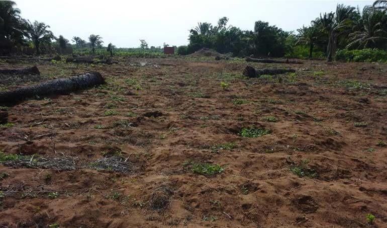 Directaid مشاريع التنمية Green Yard Project -3rd 7