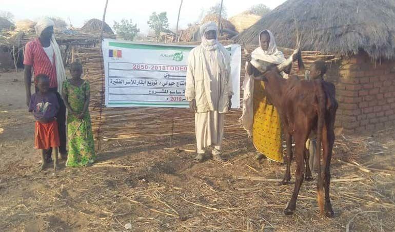 Directaid مشاريع التنمية project animal production cows-21 1