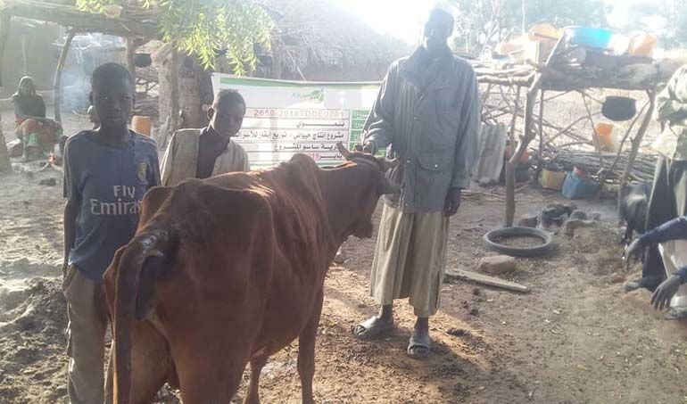 Directaid مشاريع التنمية project animal production cows-21 2
