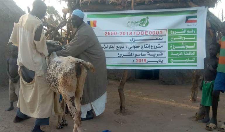 Directaid مشاريع التنمية project animal production cows-21 4