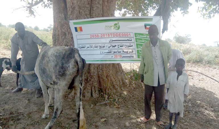 Directaid مشاريع التنمية project animal production cows-21 5